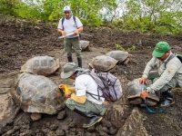 Hallan en las Islas Galápagos 30 tortugas híbridas de dos especies consideradas extintas