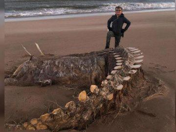 Hallan un enorme esqueleto en una playa de Escocia