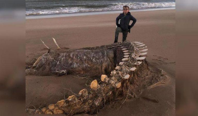Enigmático esqueleto gigante es hallado en una playa de Escocia