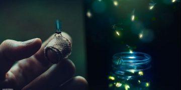 Las luciérnagas están en riesgo de extinción en todo el mundo