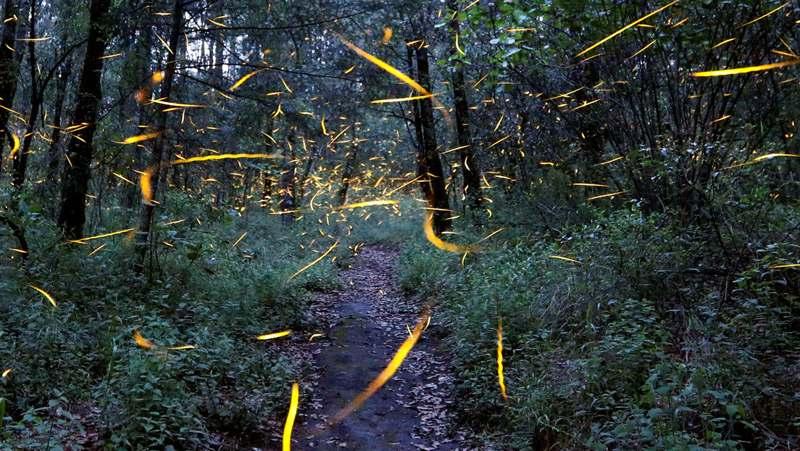 Extinción de luciérnagas
