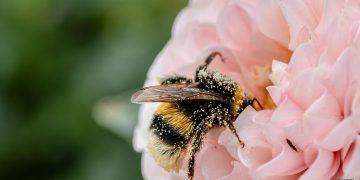 Científicos advierten sobre catastróficas consecuencias de la extinción de insectos