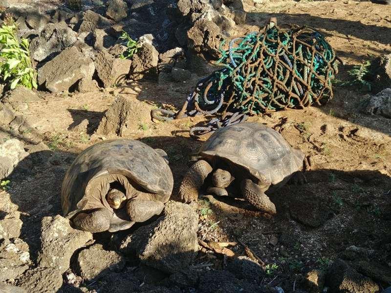 Hallan en las Islas Galápagos tortugas consideradas extintas