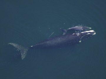 Islanda suspende la caza de ballenas durante este año