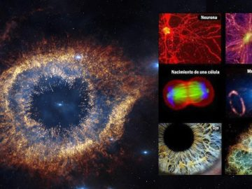 El Universo es un gran organismo viviente