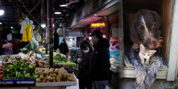 Ciudad china prohíbe vender perros y gatos debido al COVID-19