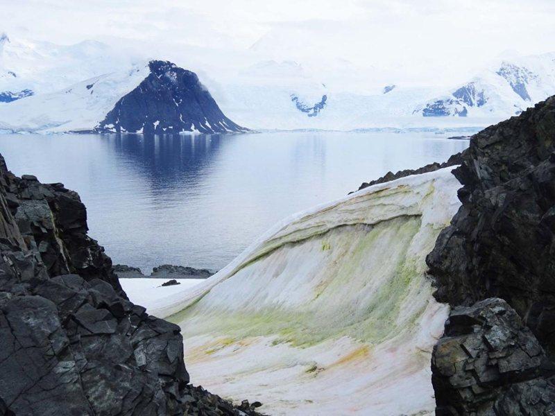 Algas nevadas multicolores