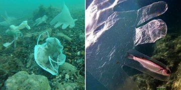 Las mascarillas y los guantes se han convertido en un nuevo problema ambiental