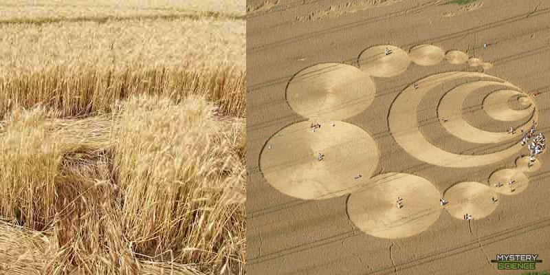Crop circles en Suiza