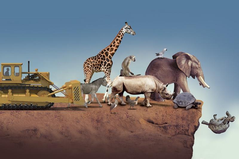 extincion de especies