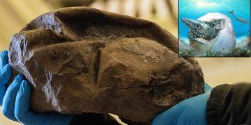 Descubren a qué especie corresponde un misterioso fósil hallado en la Antártida