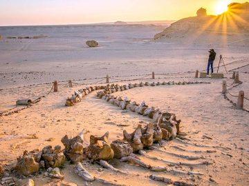 El Valle de las Ballenas en medio del desierto egipcio, ¿cómo llegaron restos de ballenas ahí?