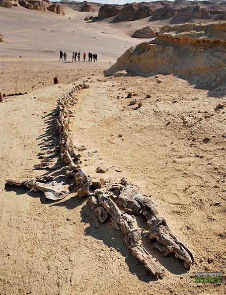 Valle de las Ballenas, Egipto