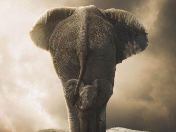 Cientos de elefantes están muriendo misteriosamente en Botswana