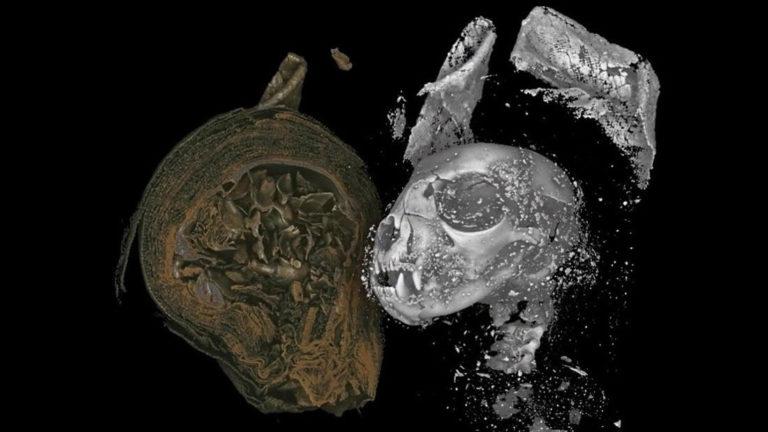 Revelan detalles de animales momificados hace 2.000 años gracias a rayos X en 3D (VIDEO)