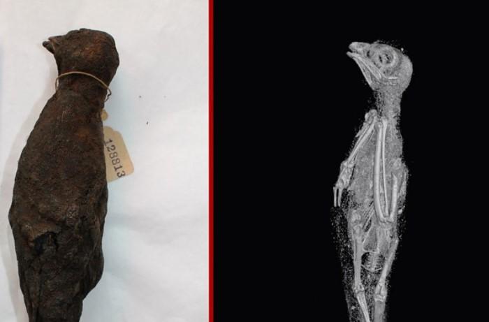 Ave momificada en el antiguo Egipto y su imagen de rayos-X en 3D