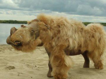 El cambio climático causó la extinción de los rinocerontes lanudos hace 14.000 años