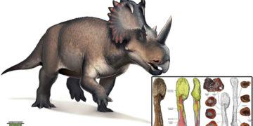 Descubren cáncer en el fósil de un dinosaurio que vivió hace unos 76 millones de años