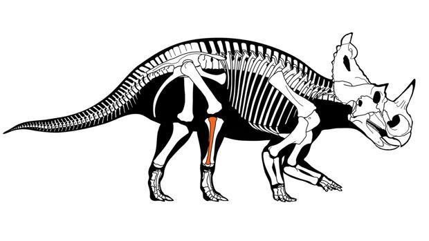 Cáncer en el hueso de un dinosaurio