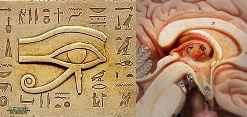 Ojo de Horus y glándula pineal