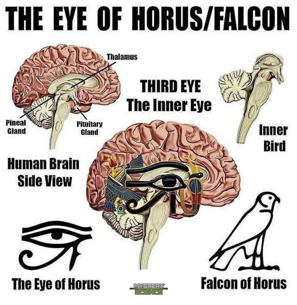 El Ojo de Horus, el halcón de Horus y la glándula pineal