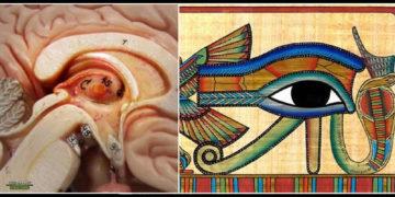 El Ojo de Horus y la Glándula Pineal: sorprendentes similitudes relacionadas al cerebro y la mente
