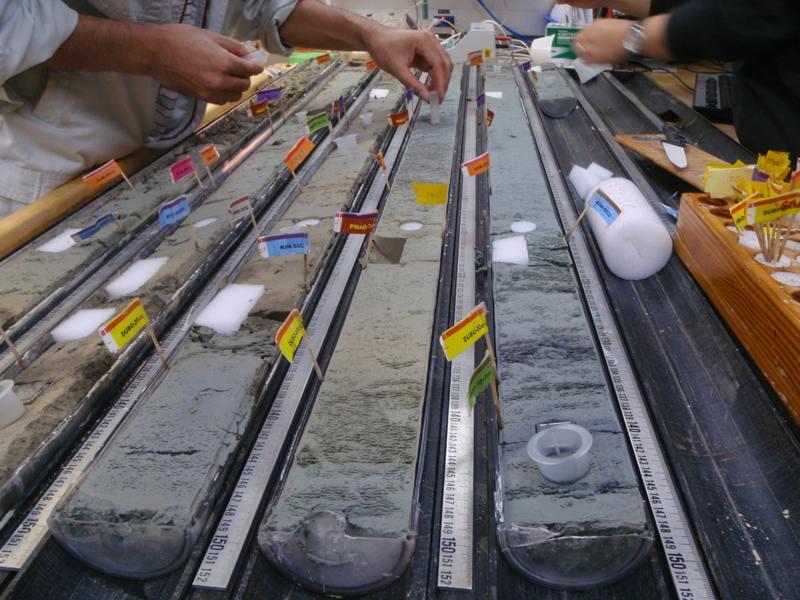 Hallan y reviven bacterias en sedimentos de más de 100 millones de años
