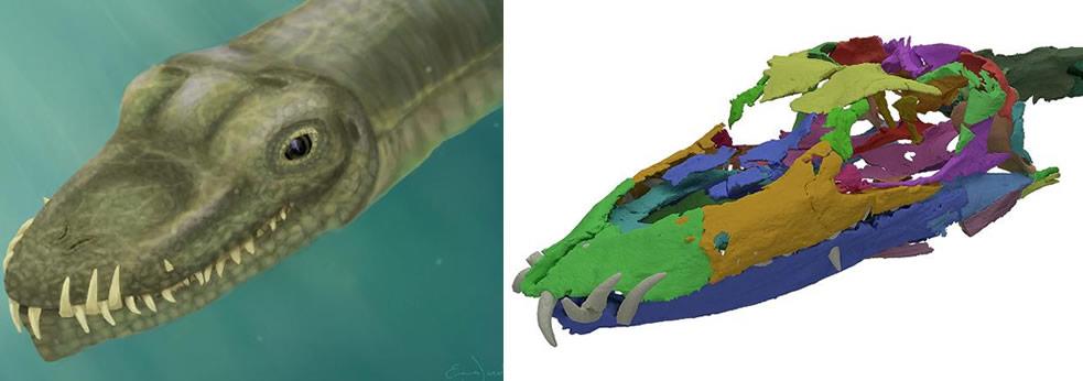Imagen ilustrativa y Reconstrucción en 3D del cráneo del Tanystropheus