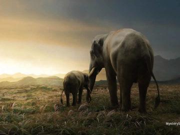 Descubren la causa de la muerte de más de 300 elefantes en Botsuana