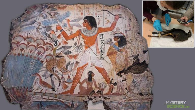 Descubren el origen de millones de aves sacrificadas en el Antiguo Egipto