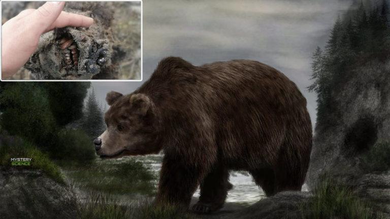 Encuentran el cuerpo de un oso extinto hace 15.000 años, completamente conservado