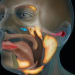 Hallan un nuevo órgano dentro de la cabeza humana