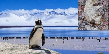 Deshielo en la Antártida revela restos de pingüinos preservados durante de 800 años