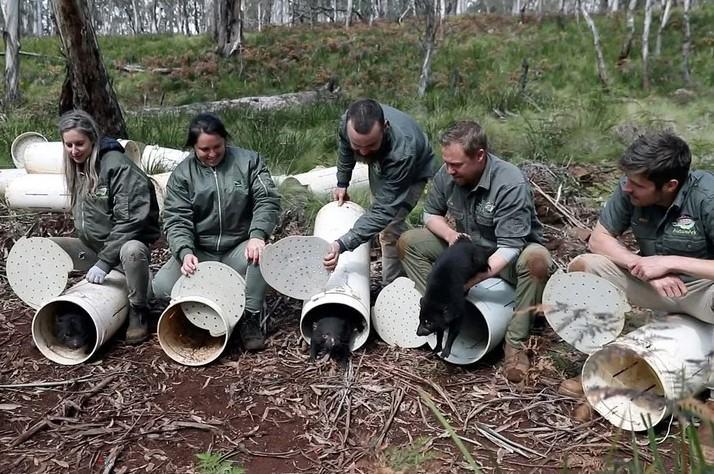 Extinción demonios de tasmania