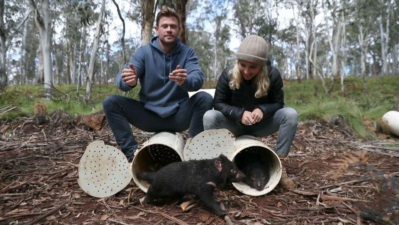 Chris Hemsworth libera a los demonios de Tasmania en la naturaleza en Australia continental