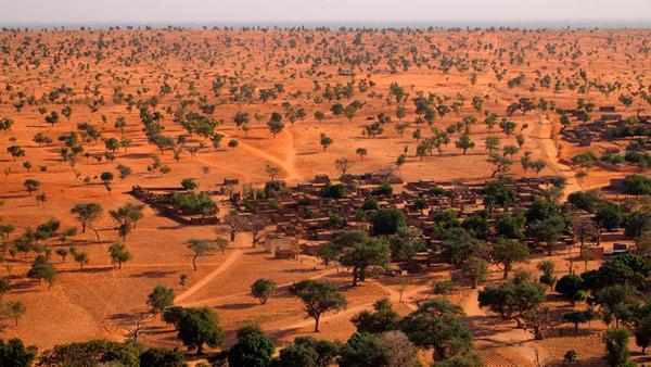El Sahara y el Sahel tienen muchísimos más árboles de lo que se creía