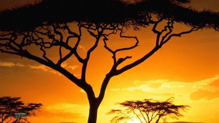Millones de árboles son descubiertos en el desierto del Sahara