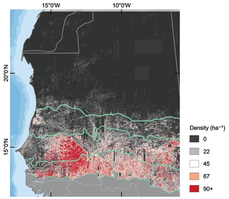 Este mapa registra la cantidad de árboles por hectárea en la zona estudiada