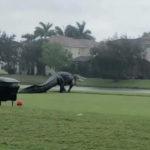 Inusual y gigantesco reptil apareció en Florida tras inundaciones por huracán Eta