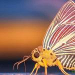 Los insectos de estas pequeñas islas han perdido la capacidad de volar