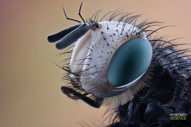 Insecto subantartico