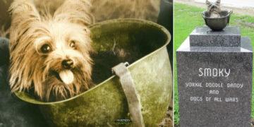 La valiente perrita que salvó a 250 soldados en la Segunda Guerra Mundial