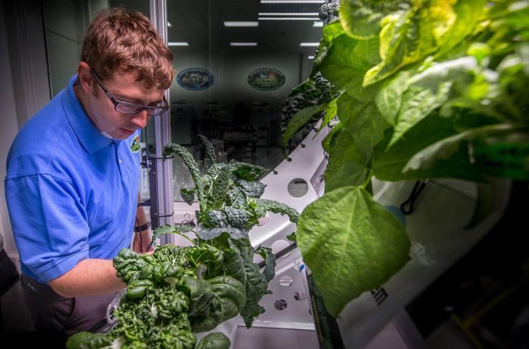 microbios por plantas en estación espacial