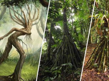 Los misteriosos árboles de la selva «que caminan»