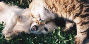 Reino Unido reconocerá legalmente que los animales tienen sentimientos