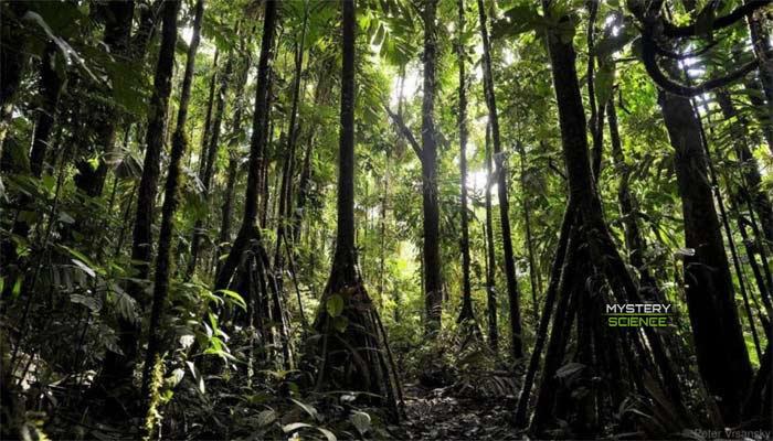 Los árboles que caminan se encuentran en las selvas americanas y son todo un tema de debat