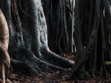 Bosque de 4.500 años de antigüedad emergió después de una fuerte tormenta