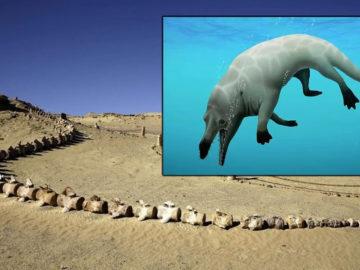 Descubren en Egipto el fósil de 43 millones de años de una ballena de cuatro patas