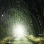 El misterioso bosque «mágico» que fue inspeccionado por la NASA