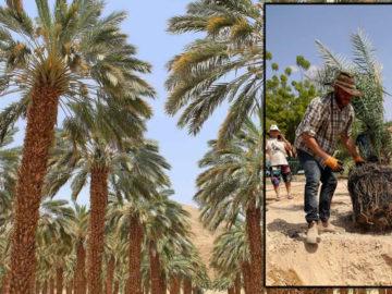 Plantan semillas de más de 2.000 años de antigüedad y germinan con éxito
